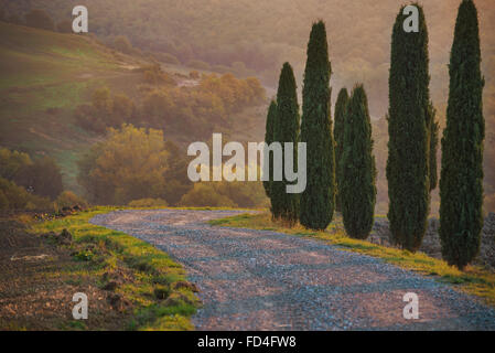 Cypresses and road - Stock Photo