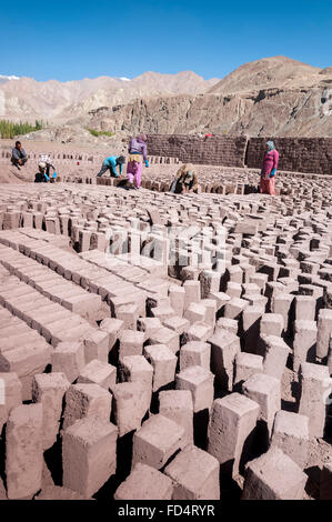 Workers in manuifacture for Making clay or mud bricks, Ladakh, India - Stock Photo