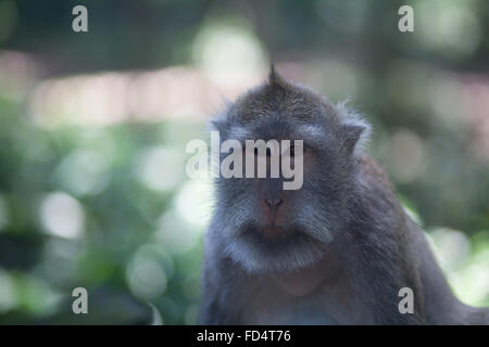 Portrait Of Sad Monkey - Stock Photo