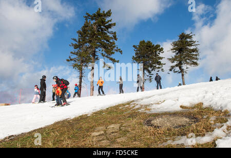 Braunlage, Germany. 28th Jan, 2016. A group of skiers ski downhill on a slope of the Wurmberg mountain in the Harz - Stock Photo