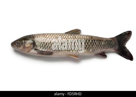 Whole single grass carp on white background - Stock Photo