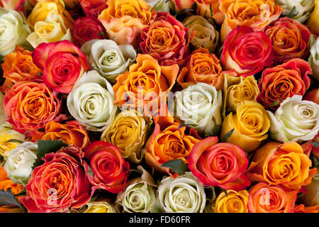 White, yellow and pink roses full frame - Stock Photo