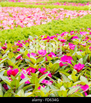 Flower bed with shallow depth of field. - Stock Photo