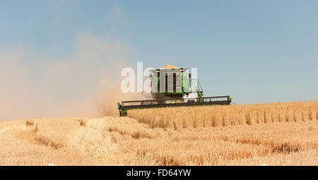 Harvester Combines Cut Summer Wheat Harvest in The Palouse in Eastern Washington - Stock Photo