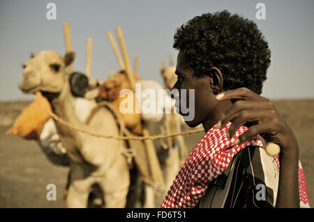 Young nomadic Afar man with dromedaries (Camelus dromedarius) in the Danakil depression, Afar Region, Ethiopia - Stock Photo