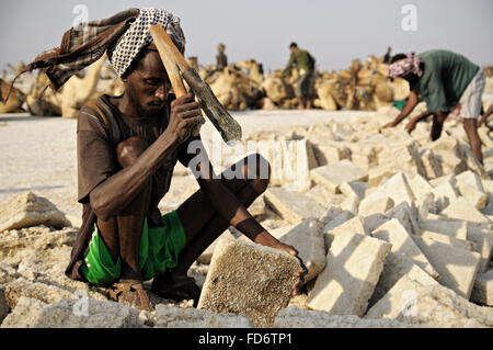 African workers extracting salt from lake Assale, Danakil depression, Afar Region, Ethiopia - Stock Photo