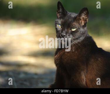 Barn barn cat - Stock Photo