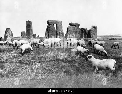 Sheep at Stonehenge in England, 1933 - Stock Photo