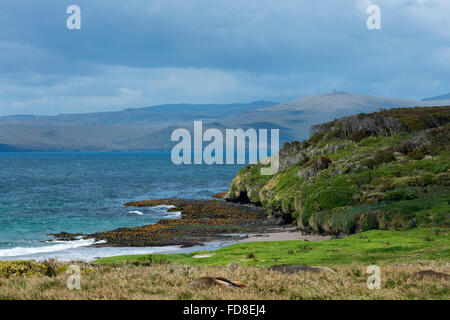 New Zealand, Auckland Islands, uninhabited archipelago in the south Pacific Ocean, Enderby Island. - Stock Photo