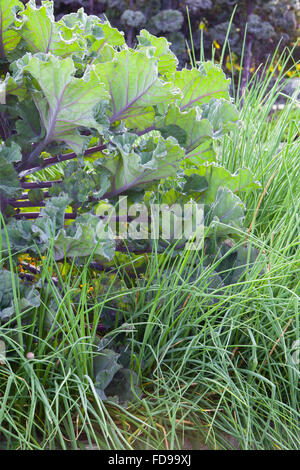 Stock Photo The Kitchen Garden At Rudding Park North Yorkshire Uk Summer July 94248626 likewise Summer Raised Bed further  on stock photo a shallow rill water feature and raised
