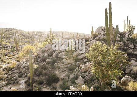 Desert scene in Baja California, Mexico - Stock Photo