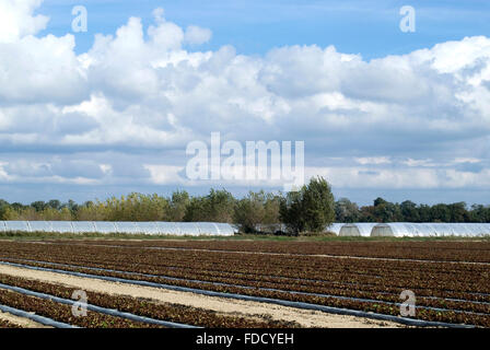 Scenic view on agricultural landscape in Camargue region, France - Stock Photo
