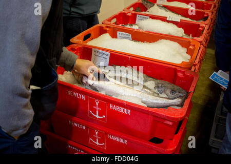 Customers handling fish at the Newlyn Harbour fish auction - Stock Photo