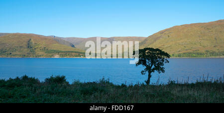 View of Loch Linnhe with a tree silhouette in the foreground from Fort William, Scotland, UK. - Stock Photo