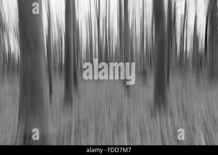 A conceptual photo using slow shutter speed of trees in a forest showing leaves - Stock Photo