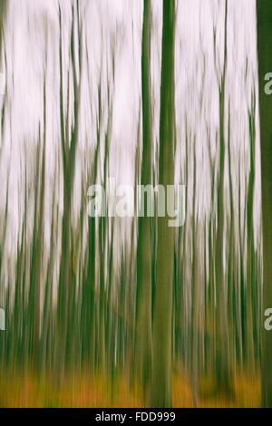A conceptual photo using slow shutter speed of trees in a forest showing green and orange leaves - Stock Photo