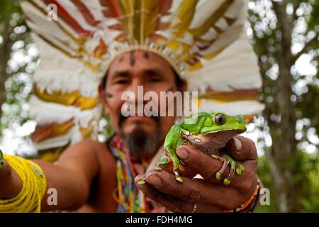 Shaman with frogs to elaborate Kambo medicine. Amazon. Alto jurua. Croa, Brazil - Stock Photo