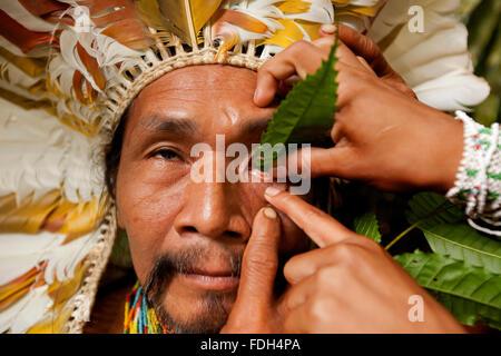 Shaman applying natural, sanango, eye-drops into his eye. Alto Jurua. Croa, Brazil - Stock Photo