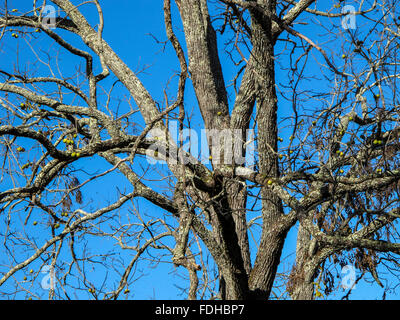 Cades Cove, isolated valley, Tennessee, The Great Smoky Mountains National Park, USA, winter, tree, blue - Stock Photo