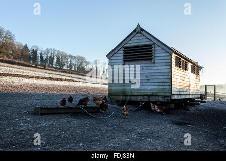 Chicken coop on a free range farm - Stock Photo