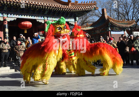 Beijing, China. 1st Feb, 2016. Folk artists practice the lion dance during a rehearsal for a upcoming temple fair - Stock Photo