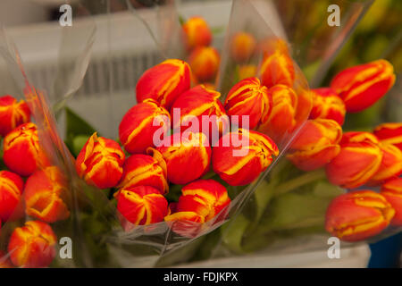 Flowers at Paloquemao farmers flower market in Bogota, Colombia, South America. - Stock Photo