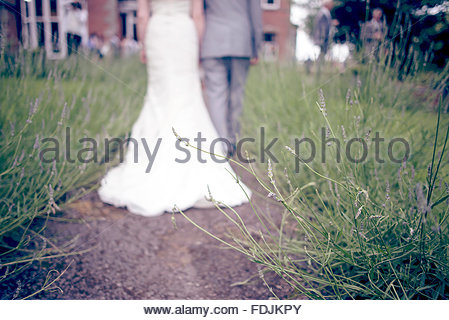 Bride and Groom walk through Lavender on Wedding Day - Stock Photo