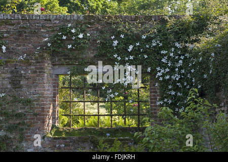 Clematis overhanging window on the wall between the Tower Lawn and the Rose Garden, at Sissinghurst Castle Garden, - Stock Photo