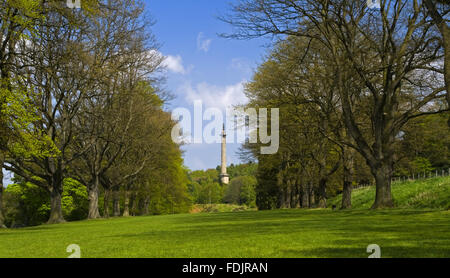 View down the Long Walk or Avenue of oak trees towards the Column to Liberty, at Gibside, Newcastle upon Tyne. George - Stock Photo