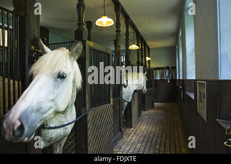 Horses in loose boxes in the stables, built in 1864, at Arlington Court, Devon. They are kept to pull the carriages - Stock Photo