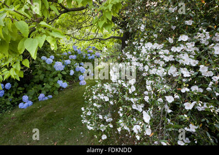 Marvelous Emmetts Garden Stock Photo Royalty Free Image   Alamy With Great Hydrangea And Eucryphia In August At Emmetts Garden Kent  Stock Photo With Nice Shady Garden Ideas Also The Bone Garden By Tess Gerritsen In Addition Gardening Kit And Collapsible Garden Bag As Well As Modern Garden Screening Additionally Asda Gardening Products From Alamycom With   Great Emmetts Garden Stock Photo Royalty Free Image   Alamy With Nice Hydrangea And Eucryphia In August At Emmetts Garden Kent  Stock Photo And Marvelous Shady Garden Ideas Also The Bone Garden By Tess Gerritsen In Addition Gardening Kit From Alamycom