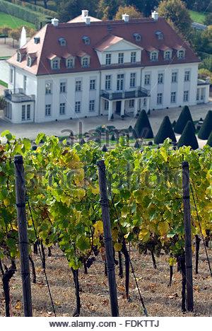 vineyard,wine-growing region,castle wackerbarth - Stock Photo
