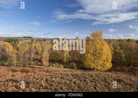 View to Ibsley Common from Rockford Common, Hampshire, in October. - Stock Photo