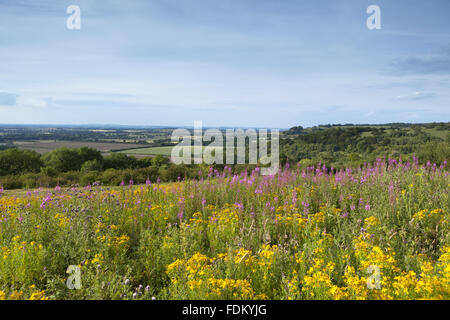 View north from Watlington Hill, Oxfordshire, in July. - Stock Photo