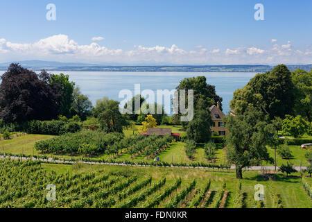 Vineyards and Lake Constance, Hagnau am Bodensee, Bodenseekreis, Upper Swabia, Baden-Württemberg, Germany - Stock Photo