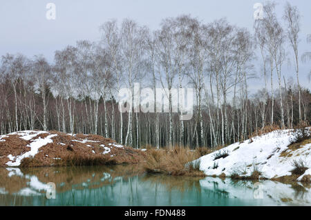 birch forest,high morr - Stock Photo