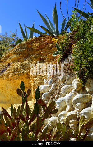 Cactus garden on Armacao De Pera Beach, Portugal - Stock Photo