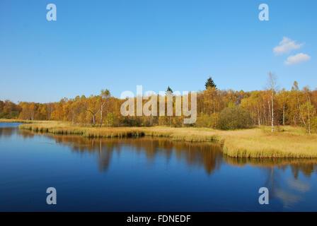 lake,swamp - Stock Photo