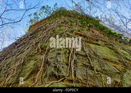 Vines growing on the side of a wall - Stock Photo