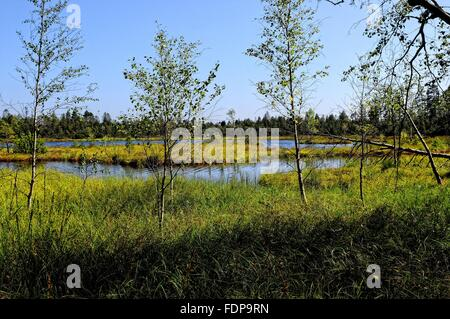 black forest,high morr,bog landscape - Stock Photo