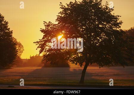 Sunrise over trees on Clifton Down, Clifton, Bristol, UK. - Stock Photo