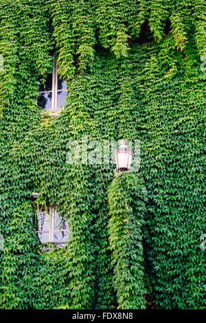 A building completely covered in lush green ivy in Rome, Italy - Stock Photo