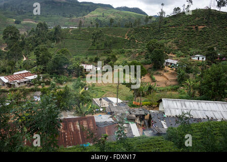 A small village of tea pickers barracks known as 'Lines' on a tea plantation in Central Province, Sri Lanka. - Stock Photo