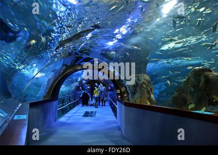 In the Aquarium of San Sebastian (Donostia), Basque Country, Spain. - Stock Photo
