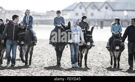 Donkeys on the Beach at Weston Super Mare, Somerset, UK - Stock Photo
