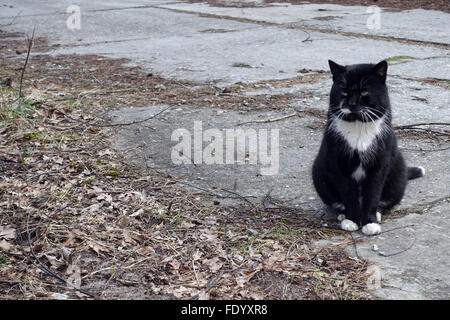 Swinoujscie, Poland, cat sitting alone on the road - Stock Photo