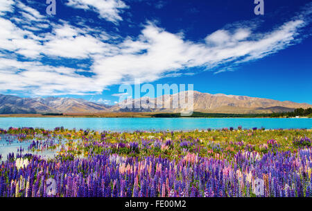 Mountain landscape with lake and flowers, New Zealand - Stock Photo