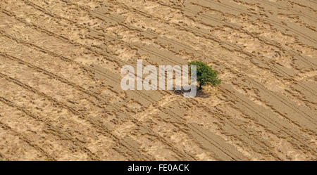 Aerial view, cornfield with lying Ears of corn after heavy rainfall, crop damage, crop failure, Hammer north, Gerstenfeld,Barley - Stock Photo