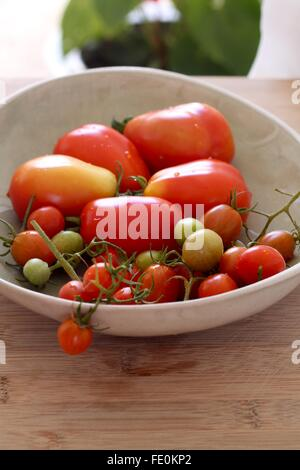 Freshly picked tomatoes - Stock Photo