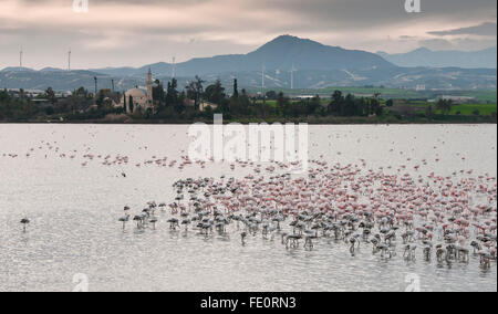 Group of wild Flamingo Birds r  at Larnaca salt lake in front of the famous Hala sultan Tekke Muslim shrine mosque - Stock Photo